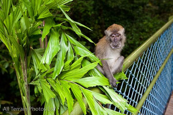 Mount Richie monkey